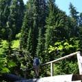 Log bridge across Diamond Creek. - Diamond Creek Falls