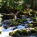 Diamond Creek.- Diamond Creek Falls