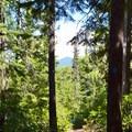 The Diamond Creek Falls Trail.- Diamond Creek Falls