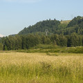 View of Mount Hood (11,249 ft) from the Sandy River Delta, Thousand Acre Park.- Sandy River Delta, Thousand Acres Park