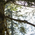 Unidentified woodpecker (help us identify it by providing feedback).- Sheep Canyon