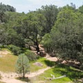 The campground is set in a valley among live oak and California foothill pine.  - Live Oak Campground