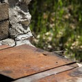 Western fence lizard (Sceloporus occidentalis) soaking up some heat at Diablo Grill. - Live Oak Campground