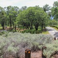 Junction Campground, Mount Diablo State Park.- Junction Campground
