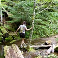 A small stream crossing along the South Breitenbush Gorge National Recreation Trail.- South Breitenbush Gorge National Recreation Trail