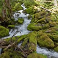 Roaring Creek tumbles over moss-covered rocks below a log footbridge on the South Breitenbush Gorge National Recreation Trail.- South Breitenbush Gorge National Recreation Trail