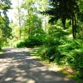 Dash Point State Park Campground.- Dash Point State Park Campground