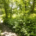 Hiking trail in Dash Point State Park Campground.- Dash Point State Park Campground