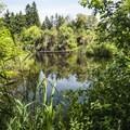 Marlake in West Hylebos Wetlands Park.- West Hylebos Wetlands Park