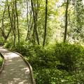 The interpretive loop trail in West Hylebos Wetlands Park.- West Hylebos Wetlands Park