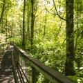 Interpretive loop trail in West Hylebos Wetlands Park.- West Hylebos Wetlands Park