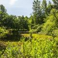 Brooklake in West Hylebos Wetlands Park.- West Hylebos Wetlands Park