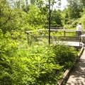 Brooklake viewpoint in West Hylebos Wetlands Park.- West Hylebos Wetlands Park