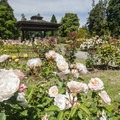 Point Defiance Park Rose Garden.- Point Defiance Park