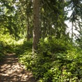 Point Defiance Outside Loop Trail.- Point Defiance Outside Loop Trail