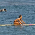 Wildlife and surfing mix at Pleasure Point.- Opal Cliffs