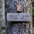 Follow Timberline Trail No. 600 to Muddy Fork.- Muddy Fork