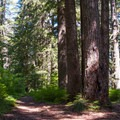 - Larch Mountain Trail
