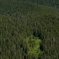 Looking down from Sherrard Point at the forests along the flanks of Larch Mountain.- Larch Mountain, Sherrard Point