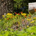 Wildflowers are abundant on the trail to Fish Creek Mountain.- Fish Creek Mountain