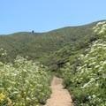 Gray Whale Cove Trail.- Montara Mountain