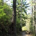Brooks Creek Trail.- Brooks Creek Trail