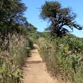 Montara Mountain Trail.- Montara Mountain Trail