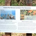A sign detailing the struggle against invasive plants.- San Pedro Valley County Park