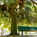 McKinley Park has benches and shade throughout.- McKinley Park