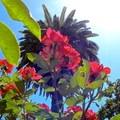 Rose and palm tree, McKinley Park.- McKinley Park