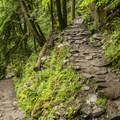 The Chirico Trail.- Poo Poo Point via Chirico Trail
