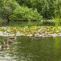 Lake Boran.- Lake Boran Park