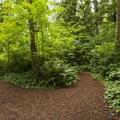 Lewis Creek Park trail system.- Lewis Creek Park