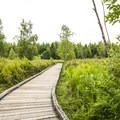 Mercer Slough Nature Park.- Mercer Slough Nature Park