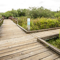 Mercer Slough Nature Park along the Heritage Loop Trail.- Mercer Slough Nature Park