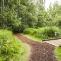 Mercer Slough Nature Park along the Bellefields Loop Trail.- Mercer Slough Nature Park