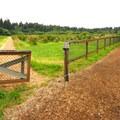 Blueberry fields at Mercer Slough Nature Park.- Mercer Slough Nature Park