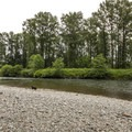 Snoqualmie River from Chinook Bend Natural Area.- Chinook Bend Natural Area