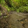 Creek along the John MacDonald Nature Loop Trail hike.- Tolt-MacDonald Park