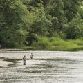 Fishermen on the Snoqualmie River at Tolt-MacDonald Park.- John MacDonald Memorial Campground