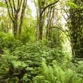 John MacDonald Nature Loop Trail.- John MacDonald Nature Loop Trail
