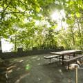 Priest Point Park picnic area.- Priest Point Park