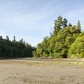 Ellis Cove at Priest Point Park.- Priest Point Park