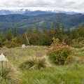 Great views from the start of the Rhododendron Ridge Trail.- Rhododendron Ridge Trail