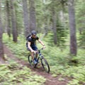 One of the fun, uninterrupted descents on the Rhododendron Ridge Trail.- Rhododendron Ridge Trail