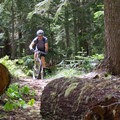 The trail is probably due for another season of maintence.- Rhododendron Ridge Trail