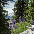 Lupine growing along the trail.- Lookout Mountain from High Prairie