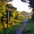 The path to beach from Bullards Beach State Park Campground.- Bullards Beach State Park Campground