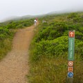 Coastal fog settles in regularly along the trail.- Coastal Trail, Rodeo Beach to Muir Beach