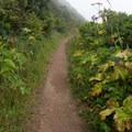 The trail toward Tennessee Valley.- Coastal Trail, Rodeo Beach to Muir Beach